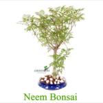 Bonsai Plants at Greenish