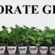 The New Era of Green Corporate Gifting
